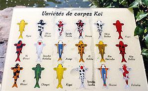 Japan photo carp koi and brocade carp japanese for Koi variety chart
